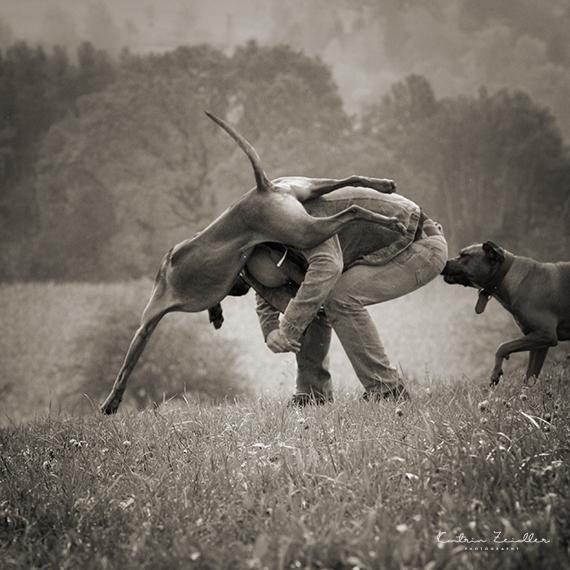 Hundefotografie - Imperssionen SHundefotografie - Impressionen Spiel mit dem Hundpiel mit dem Hund