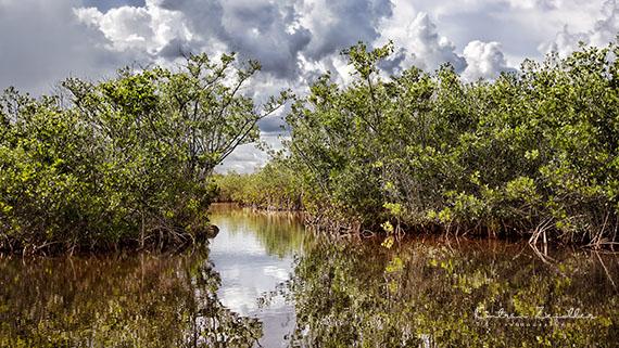 Landschaftsfotografie Florida Everglades 2