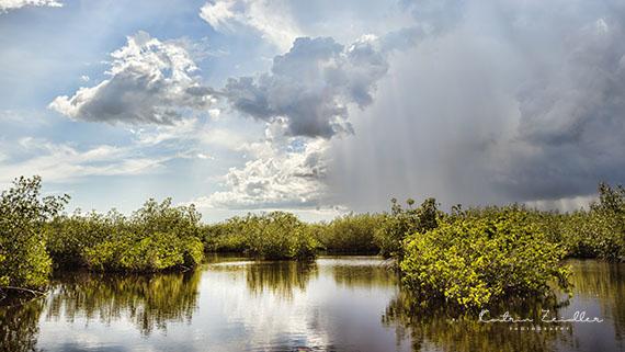 Landschaftsfotografie Florida Everglades 3