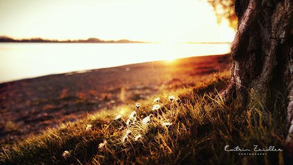 Landschaftsfotografie Markelfingen Abendsonne
