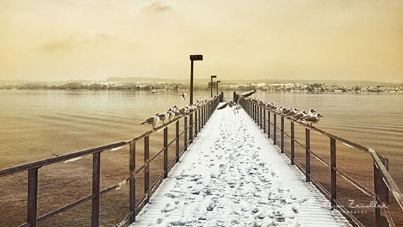Landschaftsfotografie Bodensee Nussdorf Winter Stegplatz Möwen