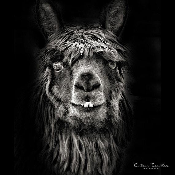 Tierfotografie Portfolio